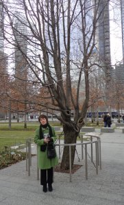 The Survivor Tree -- the only one still standing after the fall of the World Trade Center towers -- has a protected home in the 9/11 Memorial.